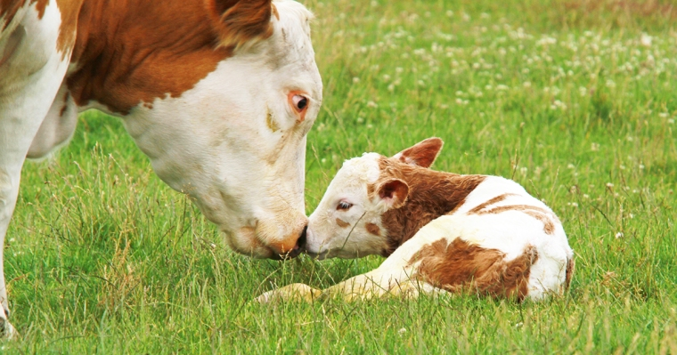 blog_our-predictions-for-farm-animals_122915_facebook