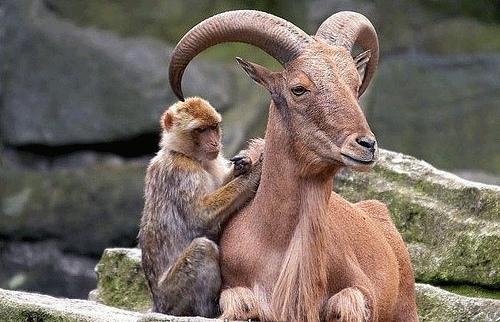 evolution-of-cooperation (1)