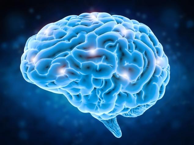 Brain-635x476