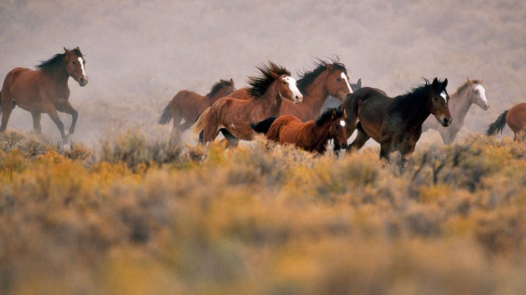 wildhorses-ingaspence-gettyimages