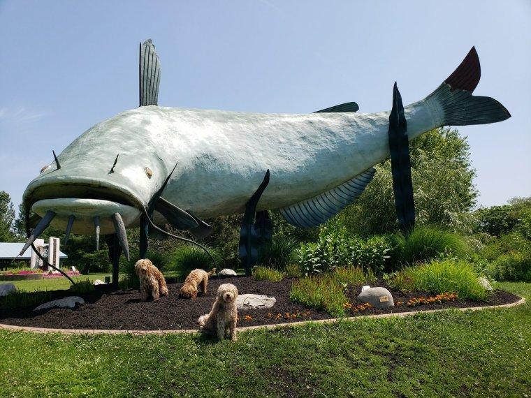 muddy-the-mudcat-statue