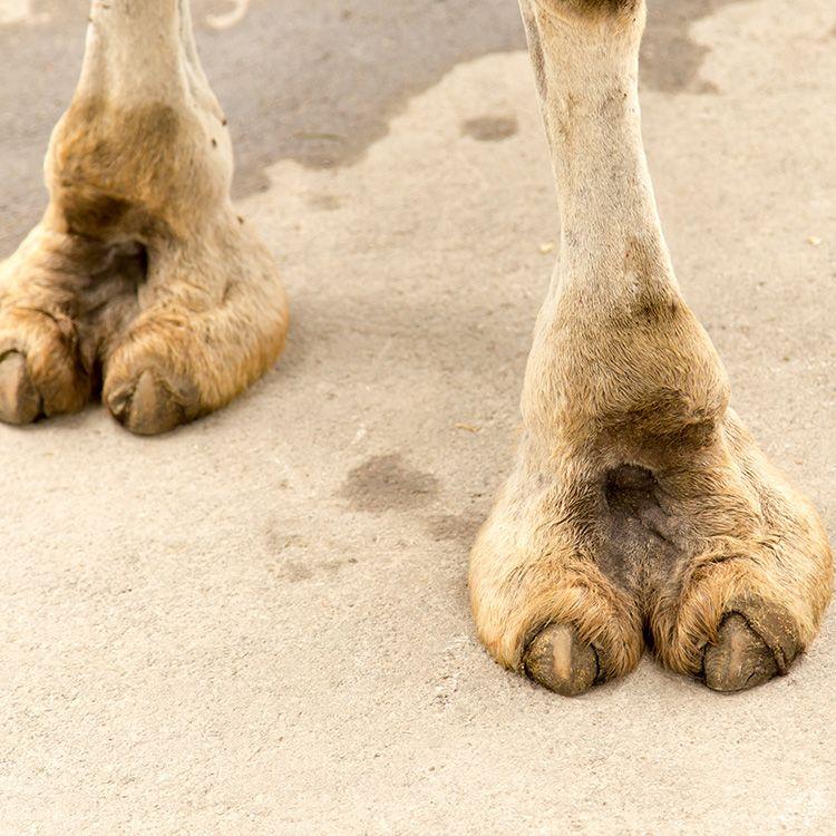 6-camel-toe-slideshow-camel-toe-1492709761