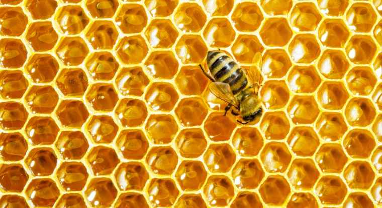 HoneyHeader1